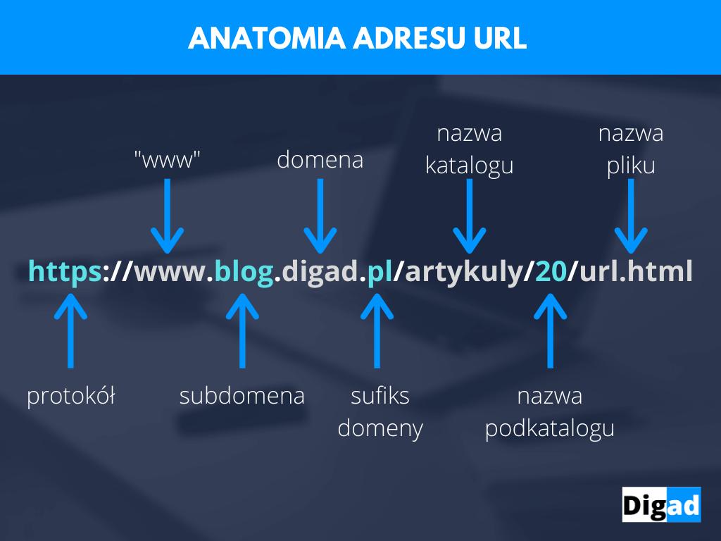Adres url anatomia